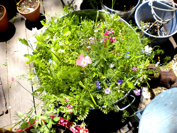 A bucket full of shade tolerant wildflowers.
