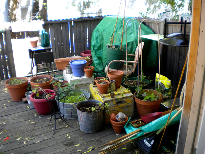 Messy deck with new baby seedlings waiting to be placed