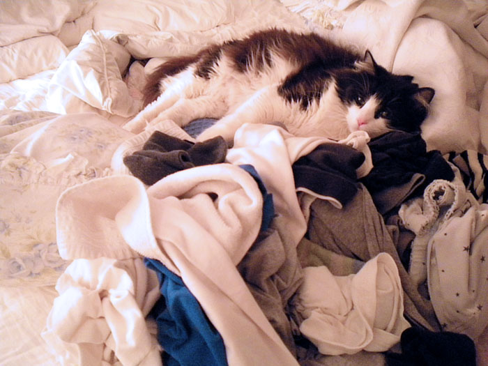 Cookie Puss in the laundry