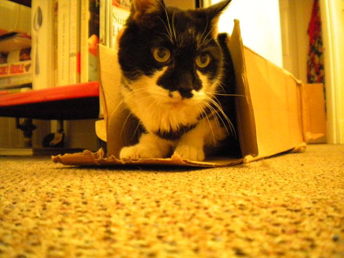 PJ in a box