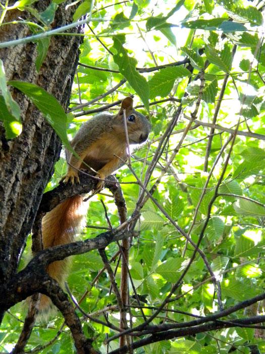Teenage squirrels