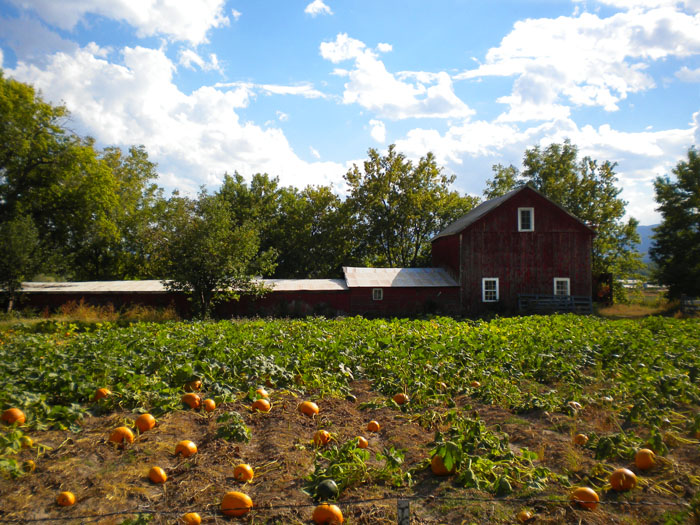 This farmhouse and pumpkin patch are for sale, across the street from Colon Orchards, Florence, CO