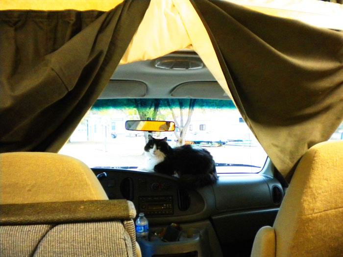Dashboard Kitty