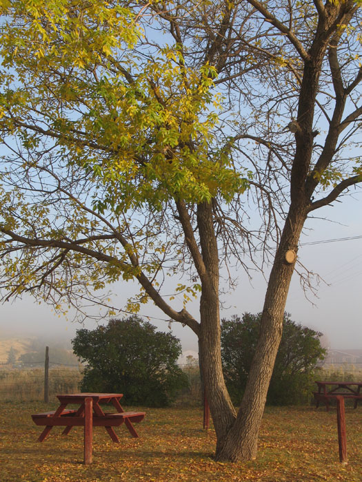A low fog hung over the campground in the morning making it really pretty. Monticello, Utah.