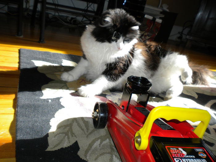Our Norwegian Forest Cat Carl isn't interested in being lifted with the 2-ton trolley jack