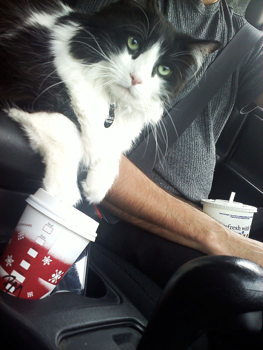 Keep your paws off my Starbucks!
