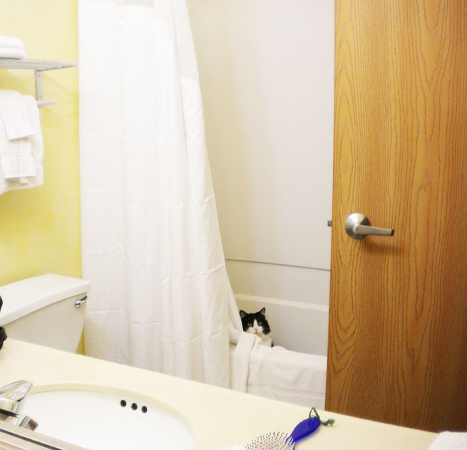 Cookie Puss is sometimes scared in hotel rooms and hides in the tub.