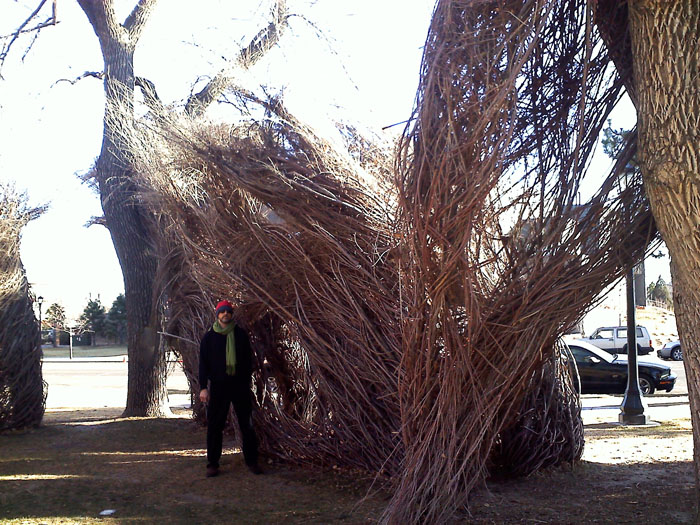 Tree sculptures, Colorado College, Colorado Springs