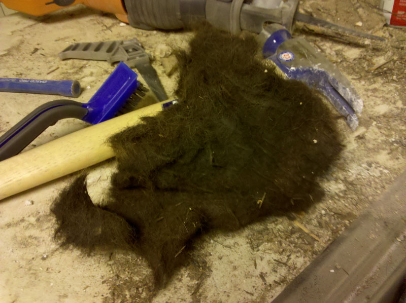 Big hunk of horse hair at Willamette.