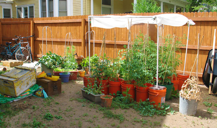 Backyard garden, late July, 2011