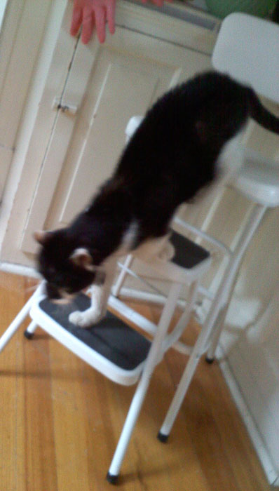 Or onto the counter- even tho there's nothing up there he likes. Maybe he just likes going up and down the ladder.
