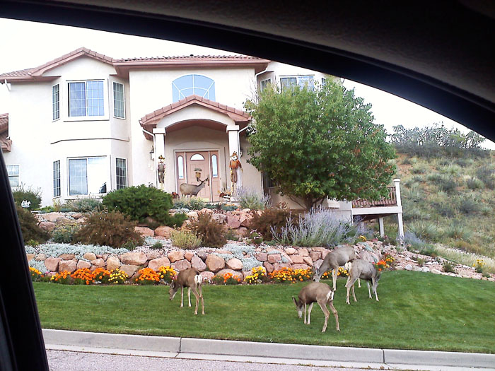 We did some driving around to look at other neighborhoods besides downtown (why!?) and came across a neighborhood where tons of deer were hanging out. It was like a deer sanctuary. There were literally probably 50 of them on a two block stretch.