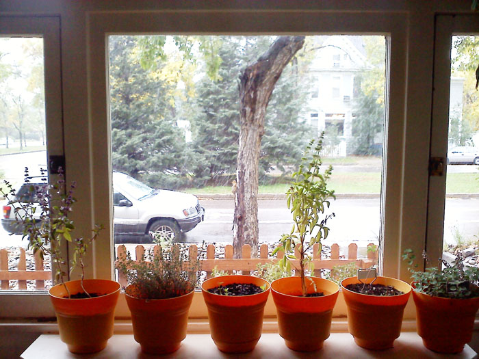 I brought the herbs inside. I hope they do ok on this windowsill.