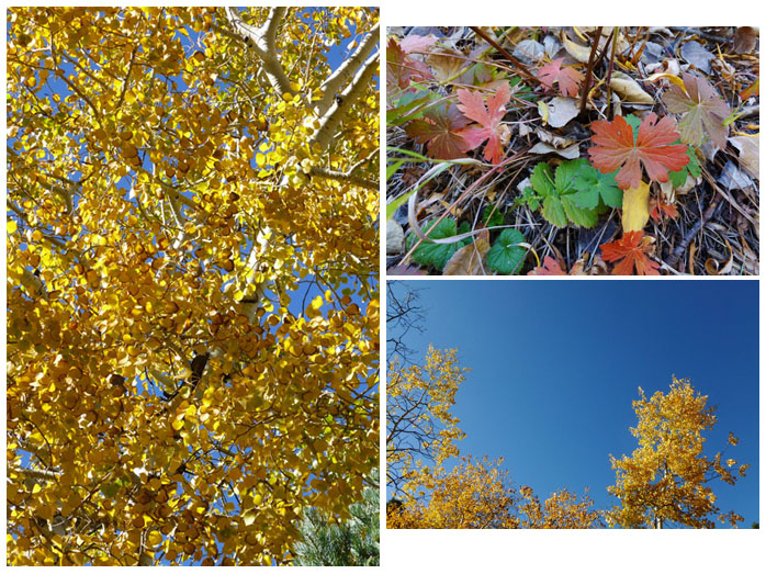 More fall foliage near Lake Isabel, CO