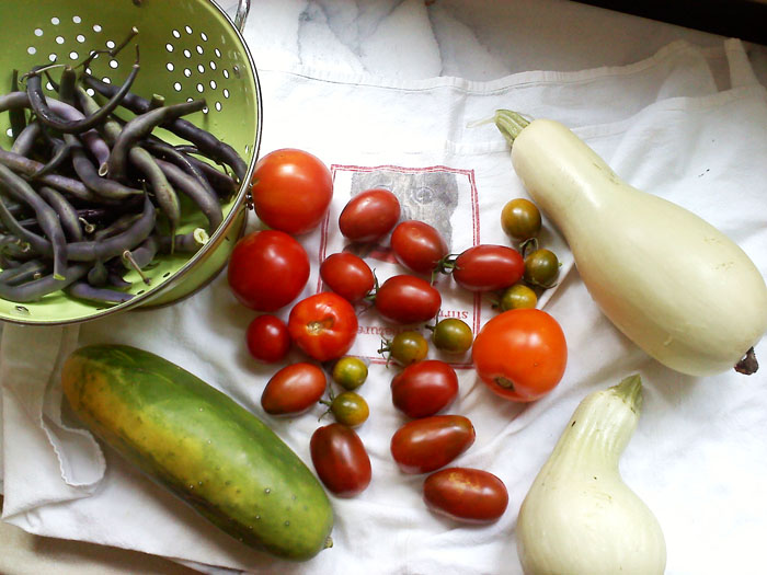 Cucumber, purple beans, tomatoes, and weird squash