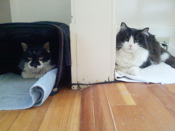 Winter in the cat house- spoiled kitties have their own heating pads