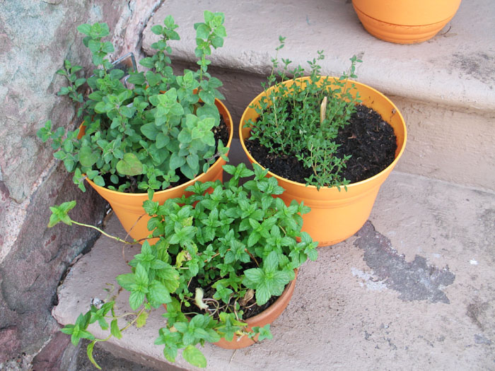 Oregano, thyme, and mint.