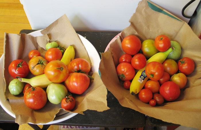 I put the tomatoes in shallow bowls with brown paper, added a banana, and covered them with more brown paper.