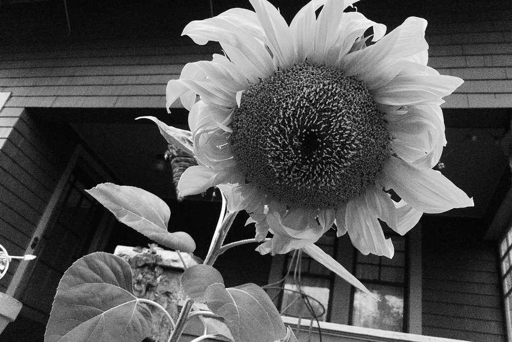 "Panasonic Lumix test shot on ""art/black and white"" setting"