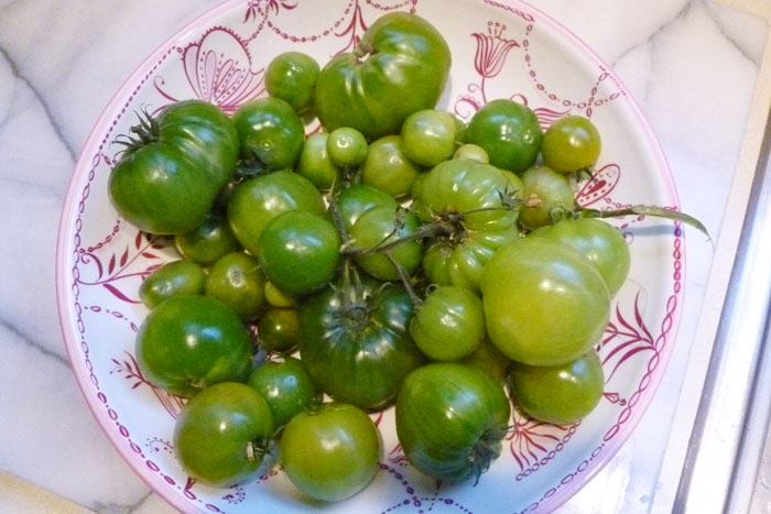 Green tomatoes from my garden. Some of them were too frost bitten to use, but others were just a little frost bitten and they worked great in this recipe