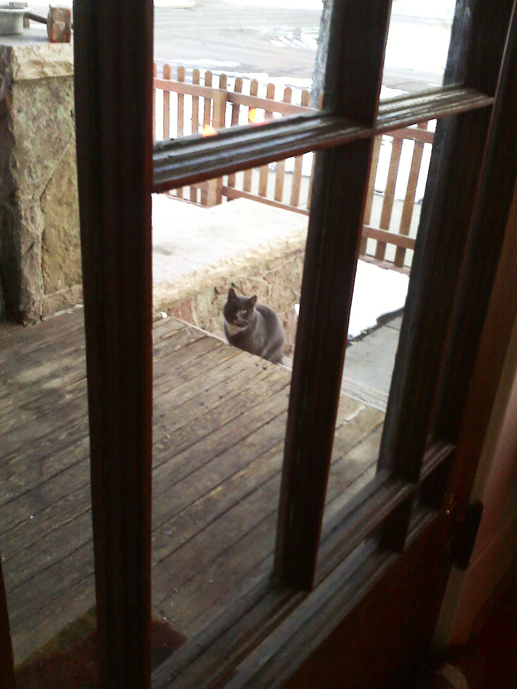 Skittish porch cat