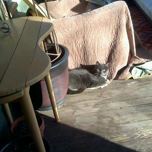 The first real sighting of the porch cat
