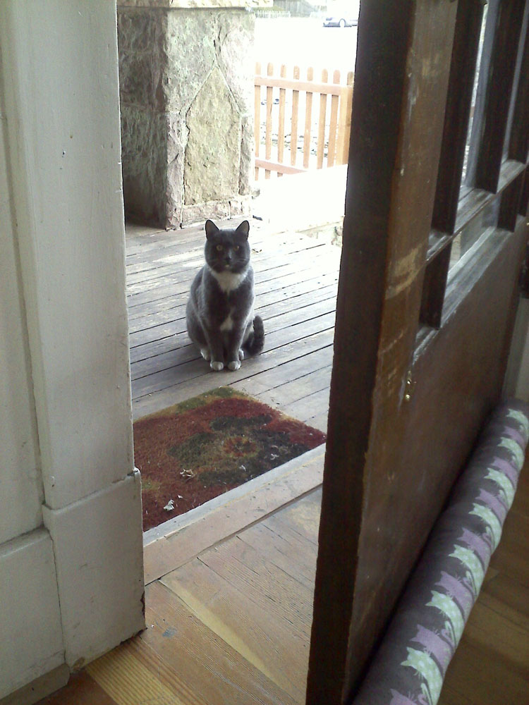 Porch cat is not sure.