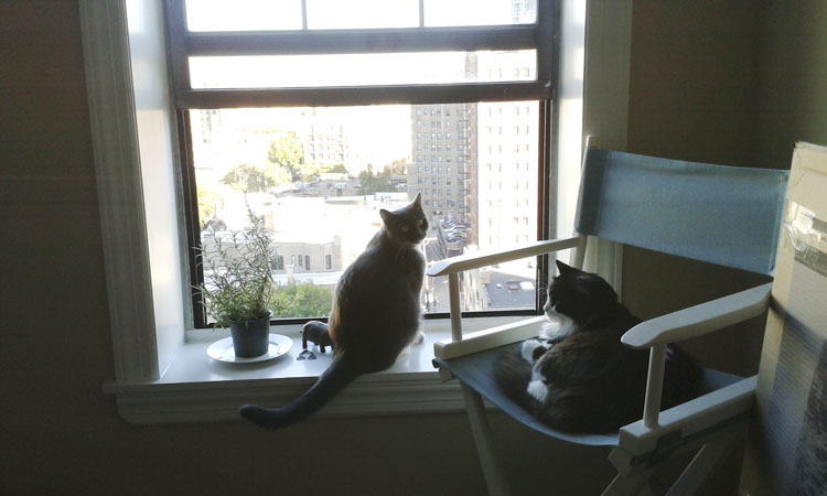 The cats enjoy looking out the window, too.