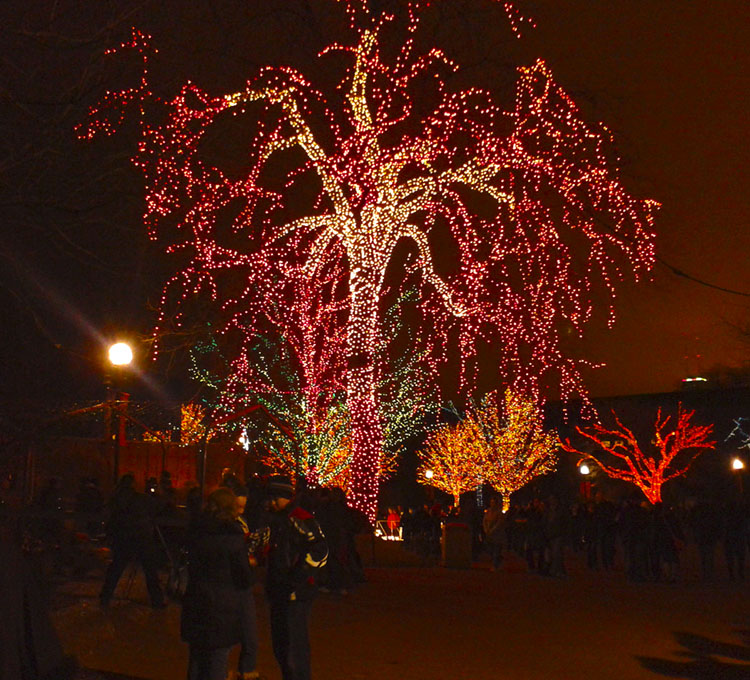 Thousands of holiday lights at the Lincoln Park Zoo