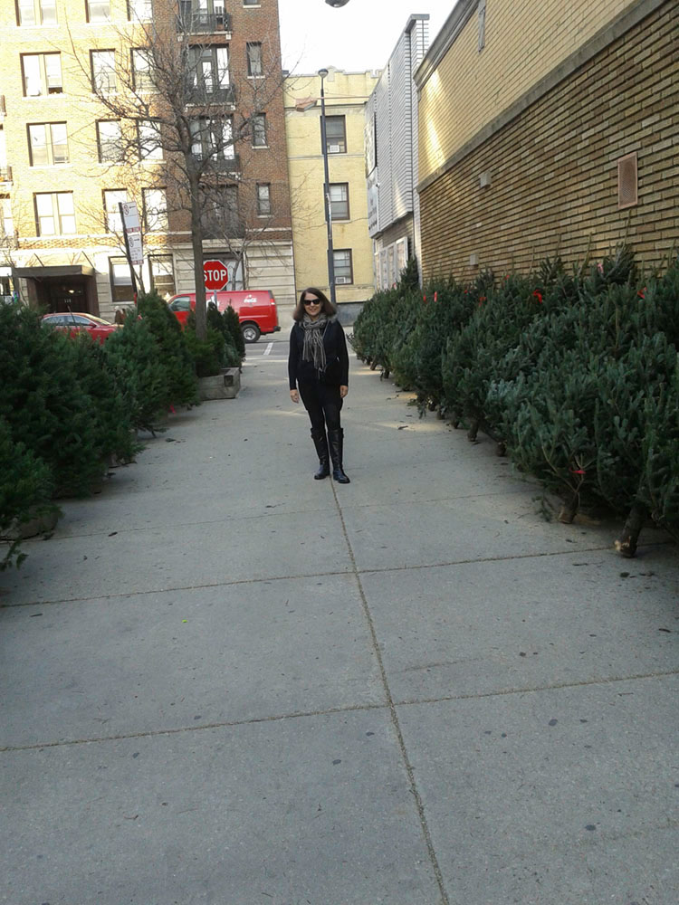 Fresh Christmas trees in Lincoln park, Chicago