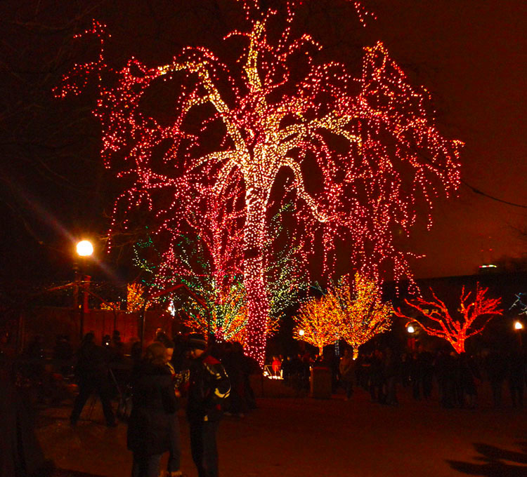 holiday lights at the lincoln park zoo, chicago