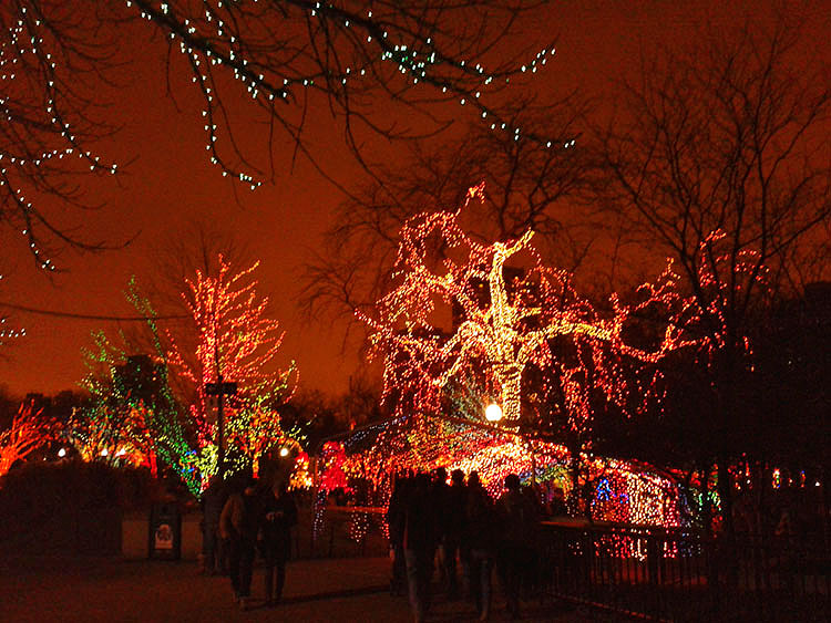 lincoln_park_zoo_holiday lights